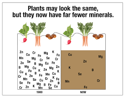 soil-nutrient-deficiency
